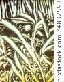 Window frost pattern 74832593
