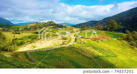 rural landscape of carpathian mountains. fields and trees on rolling hills. ukrainian village in countryside. spring scenery in dappled light 74837201