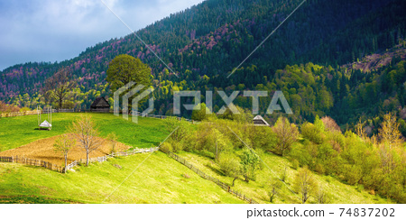 rural landscape of carpathian mountains. fields and trees on rolling hills. ukrainian village in countryside. spring scenery in dappled light 74837202