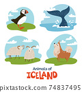 Animals of Iceland in flat modern style design 74837495