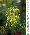 花朵 花 花卉 74843487