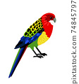 Colorful tropical parrot 74845797