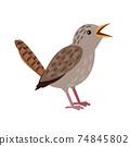 Small grey bird 74845802