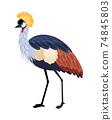 Bird with long legs 74845803