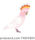 Beautiful cockatoo icon 74845804