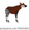 Unique tropical animal 74845805