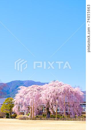 九段原學校的垂枝櫻花:長野縣飯田市 74855663