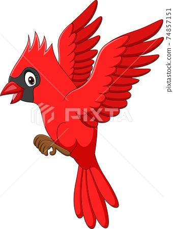 Cartoon cardinal bird flying on white background 74857151