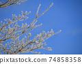 針狀冰樹霜冬季樹木結冰自然現象 74858358