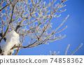 針狀冰樹霜冬季樹木結冰自然現象 74858362