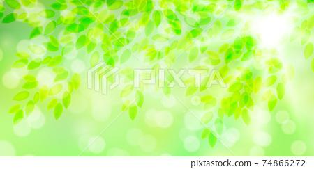 신록 잎 배경 74866272