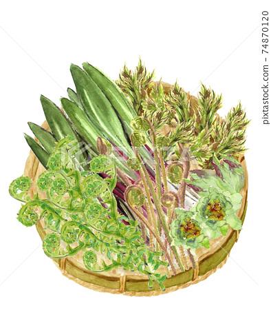 [水彩畫]漏勺上的5種春季野生植物植物成分材料白色背景PNG可複制空間 74870120