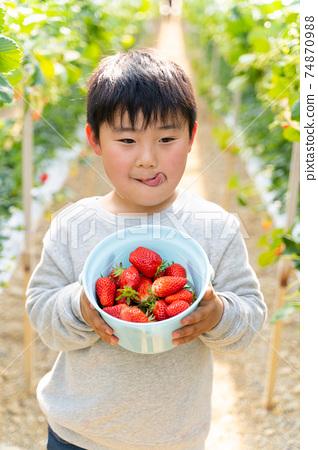 草莓採摘男孩小學生 74870988