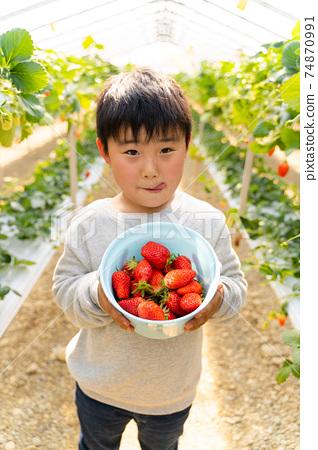 草莓採摘男孩小學生 74870991