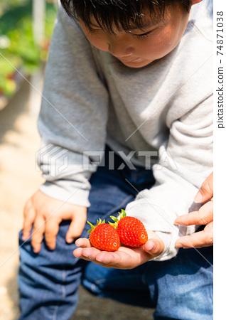 草莓採摘男孩小學生 74871038