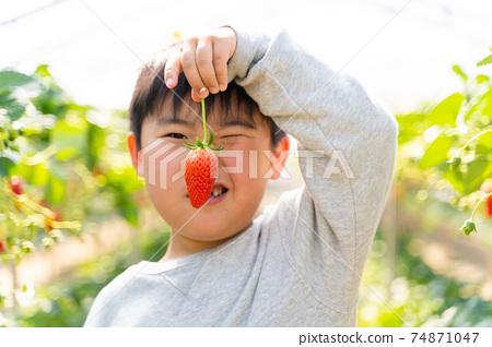 草莓採摘男孩小學生 74871047