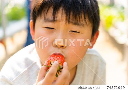 草莓採摘男孩小學生 74871049