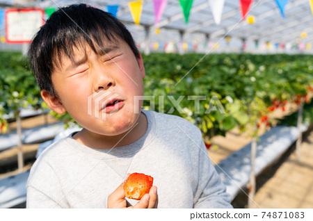 草莓採摘男孩小學生 74871083