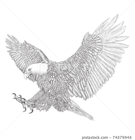 Bald eagle swoop attack winged hand draw sketch black line doodle monochrome on white background vector. 74879948