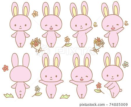 可愛的兔子 74885009