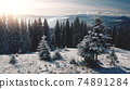 Sun over pine trees at snow mountain closeup aerial. Nobody nature landscape. Spruce forest at frost 74891284