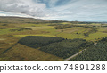 Pine forest at green valley aerial. Nobody nature landscape. Rural farmlands at road. Countryside 74891288