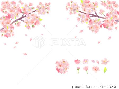 水彩畫的櫻花插圖 74894648