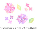 Illustration of hydrangea drawn in watercolor 74894649