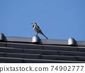 """""""拍好照片""""(坐在屋頂上擺姿勢的Sekirei) 74902777"""