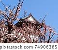 白梅,早春的天空和高知城 74906365