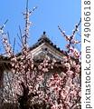 早春的高知城(白李子和李子舞台上的藍天) 74906618