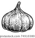 Garlic Vegetable Vintage Woodcut Illustration 74910380