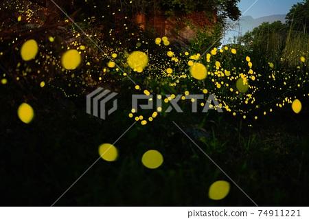 晃平河上的Hotaria parvula 74911221