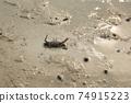 螃蟹,潮汐 74915223