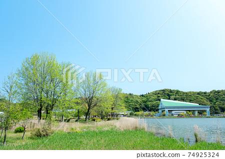 新鮮的綠色/初夏公園自行車圖片(多哥池塘) 74925324