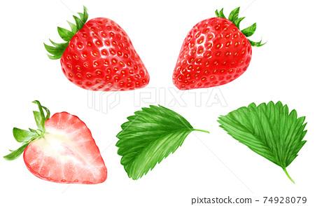 現實例證套草莓和沒有水滴的葉子 74928079