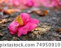 땅에 떨어졌다 핑크 동백 꽃과 거리로 가득 채운 다른 동백꽃 74950910