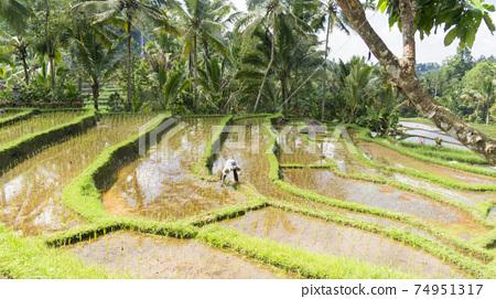 印度尼西亞巴厘島,風景秀麗的水稻梯田 74951317