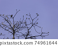 A black silhouette of a bird perched on a blossoming treetop  74961644