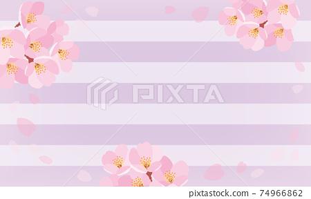 櫻花條紋背景紫色 74966862