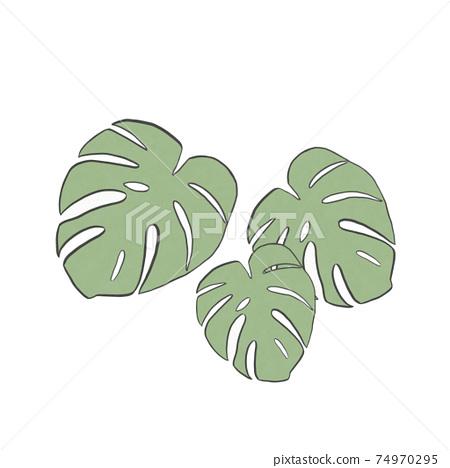 3 foliage plants Monstera 74970295