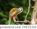 猴子 74975102