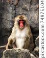 猴子 74975104