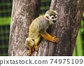 猴子 74975109