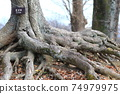 Root of a tree 74979975