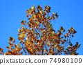 Leaf 74980109
