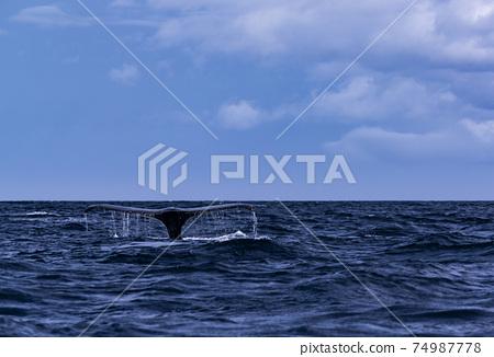 駝背鯨 74987778