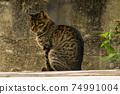 一隻貓 74991004