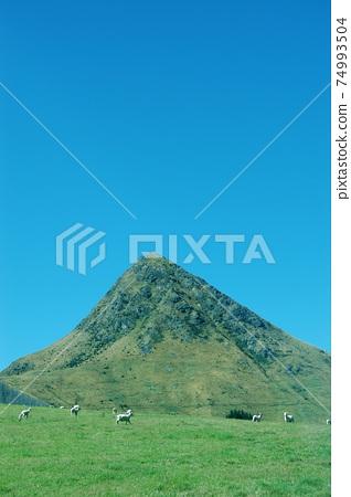 新西蘭綿羊在山莫克湖的山腳下 74993504