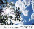 흰 구름이 떠있는 맑은 하늘과 여름의 태양을 나무 사이로 고개 75003391